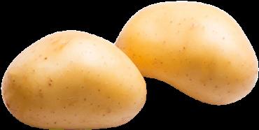 Washed Whites Potatoes